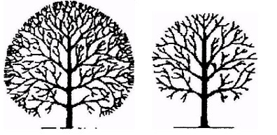 Diagram of Tree Crown Reduction and Thinning